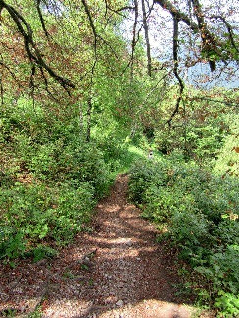 Escursione nel bosco